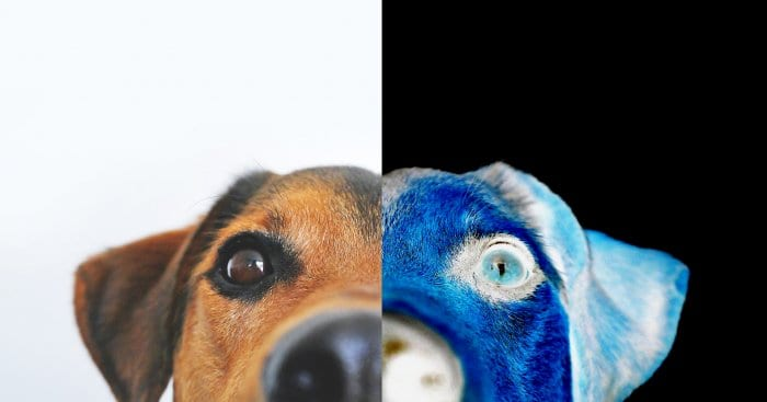 Dog inverted colors - How to Invert Colors in Photoshop 3